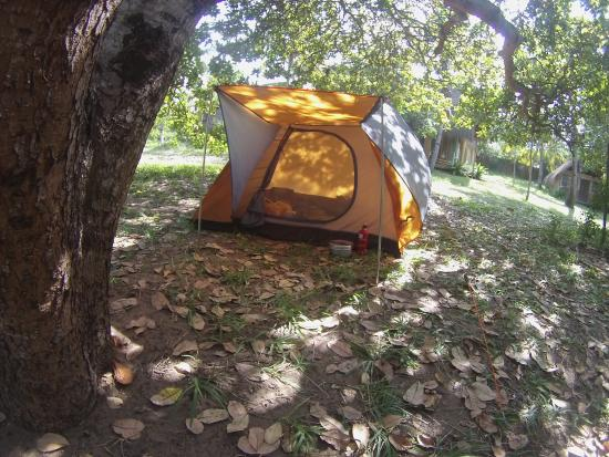 Turtle Cove: Tent and camping under the trees