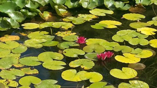 Vue du jardin picture of jardin aquatique aux fleurs de for Jardin aux fleurs