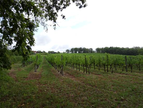 Correze, Frankreich: Vignobles de Brancielles (19)