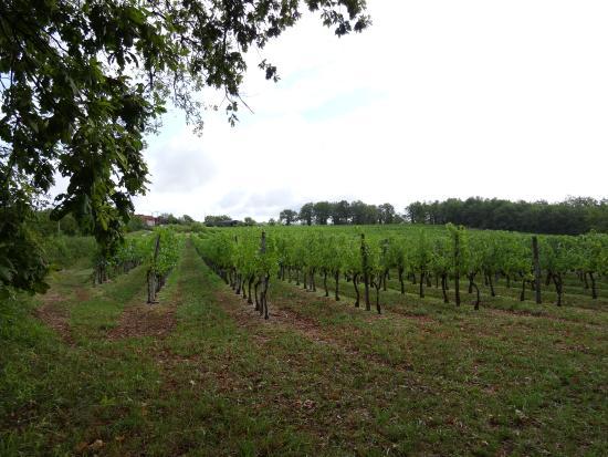 Correze, ฝรั่งเศส: Vignobles de Brancielles (19)