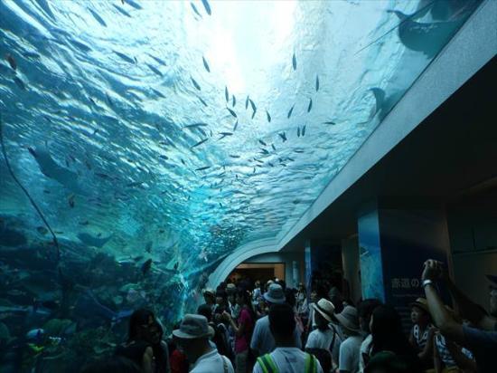 シャチのショー - Picture of Port of Nagoya Public Aquarium, Nagoya - TripAdvisor