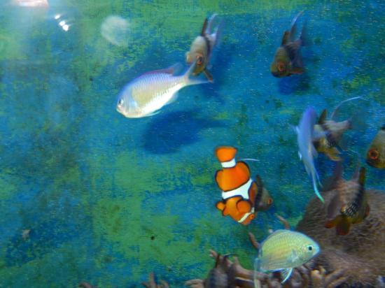 Lakes Aquarium Nemo