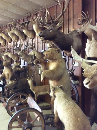 El Campo, TX: Hunters paradise