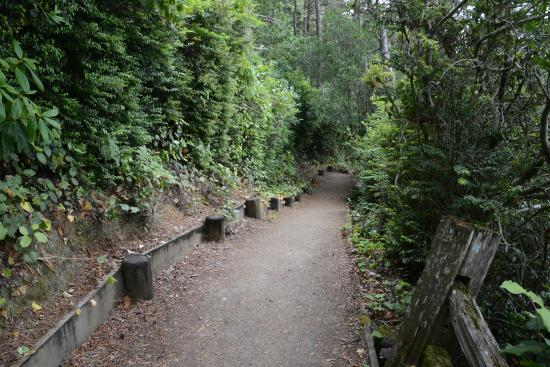 Florence, OR: Trail