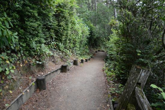 John Dellenback Dunes Trail : Trail