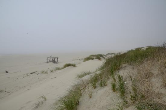 Florence, OR: Dunes-02