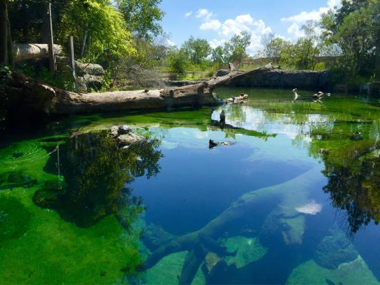 Aquarium Albany Ga