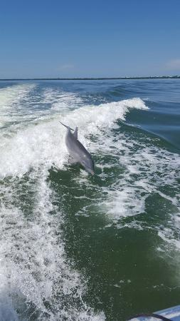 Island Girl Charters: On our trip back to pineland from cabbage key.