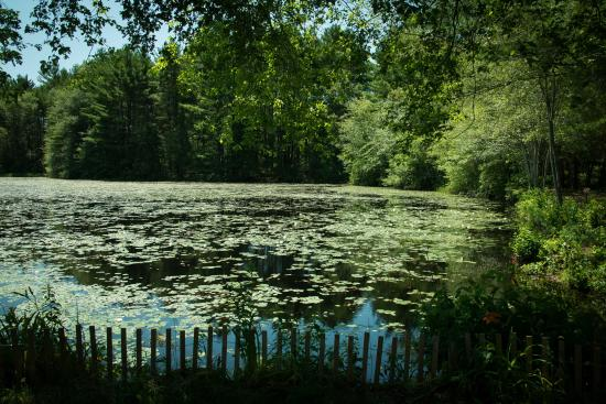 On Cranberry Pond Bed and Breakfast: Water Lilies