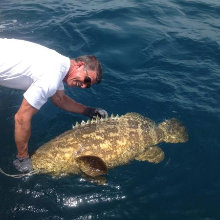 Goliath grouper and tiger shark caught deep sea fishing for Big fish in the ocean