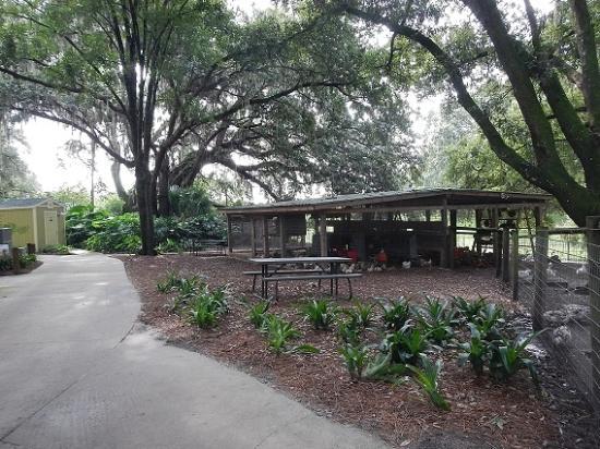 Ocoee, FL: free range hens