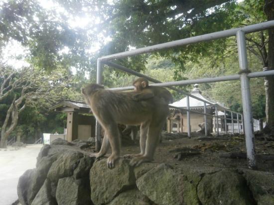 高崎山のシャーロットちゃん - Picture of Takasakiyama Natural Zoo, Oita - TripAdvisor
