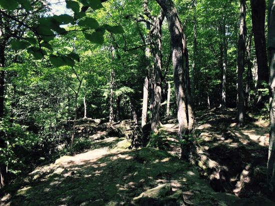 Hinckley Reservation : Whipp's Ledges