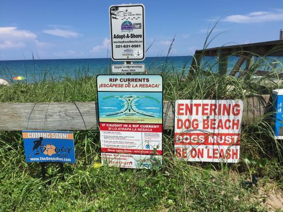 Canova Beach Dog Park: photo3.jpg