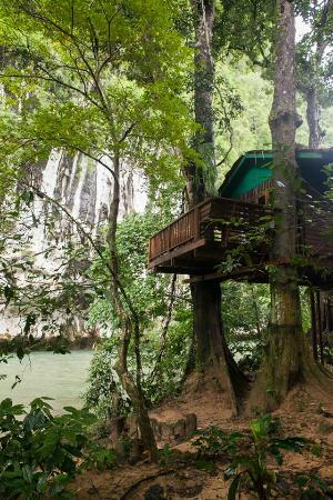 Our Jungle House : Romance Treehouse