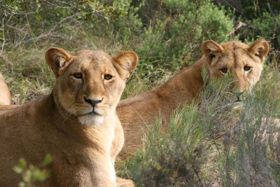 Kwantu Private Game Reserve - Day Visits: What are you looking at, buddy?