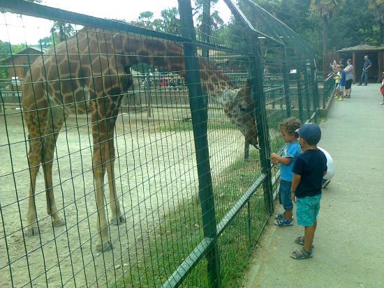 Foto Di Giardino Zoologico Di Pistoia