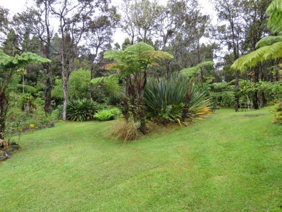 My Island Inn: Jardines
