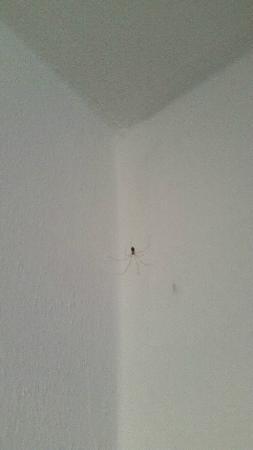 B&B Tempi Lontani: Mur avec toile d'araignée