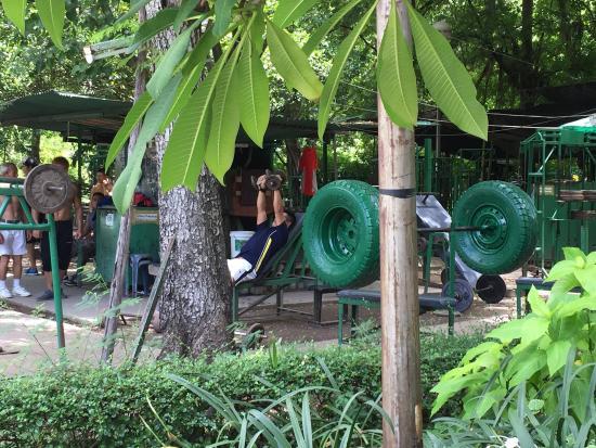 I varani del parco Lumphini