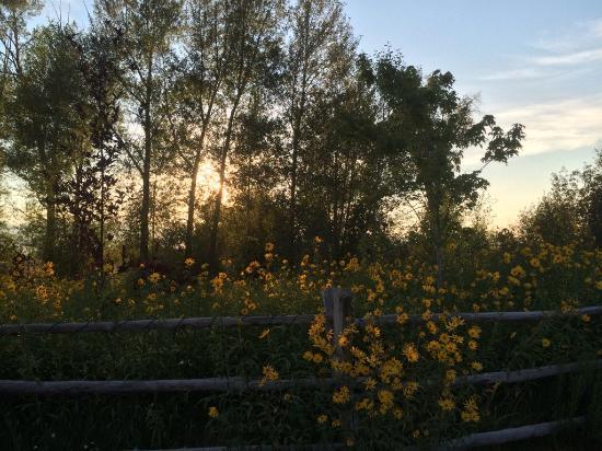 Fox Creek Inn: Late afternoon sun and grounds of B&B.