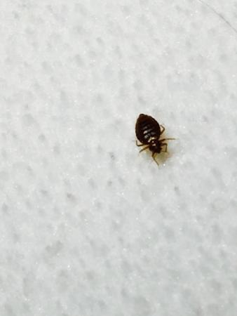 Drury Inn Orlando Bed Bugs