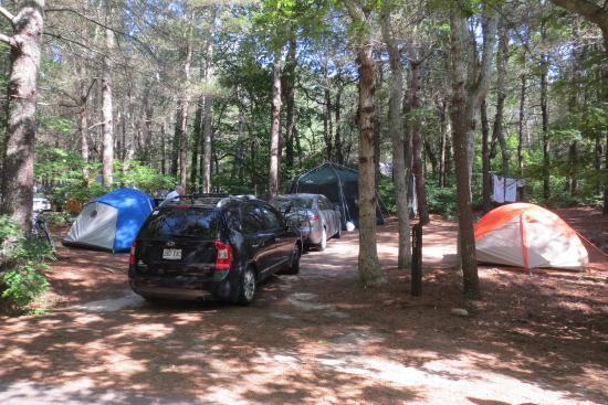 Shawme-Crowell State Forest: Site 105, aréa 6