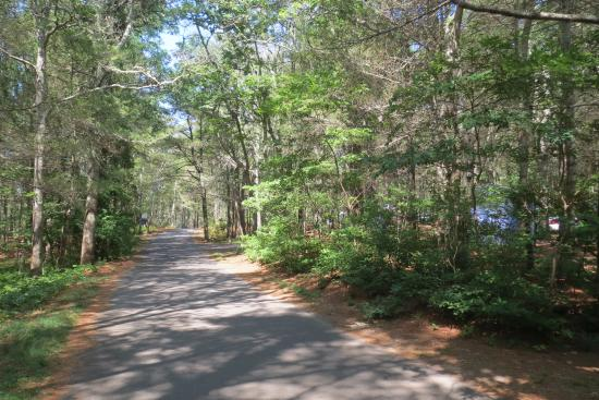 Shawme-Crowell State Forest: Les environs du site