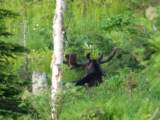 Parc National de la Gaspesie: -