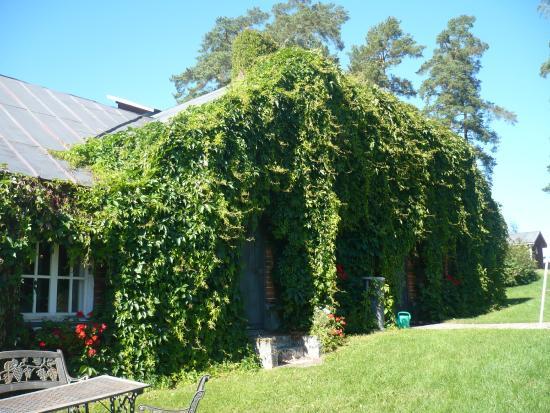 Palkane, Finland: At vineyard territory