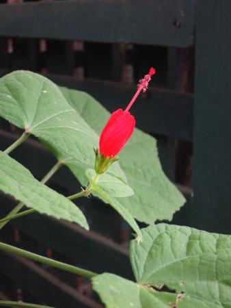 Elizabeth F. Gamble Garden: Flower