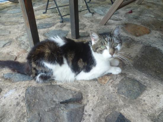 Bussiere-Poitevine, ฝรั่งเศส: The cat
