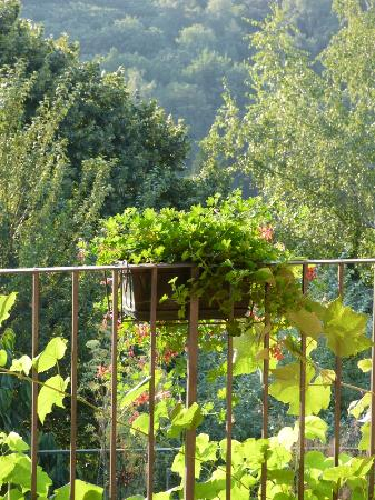 Cascina Rodiani - Green Hospitality: view from second story balcony