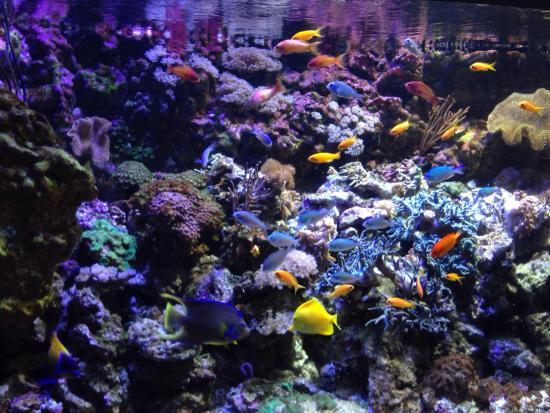 Sea Life - Picture of Gardaland SEA LIFE Aquarium, Castelnuovo del ...