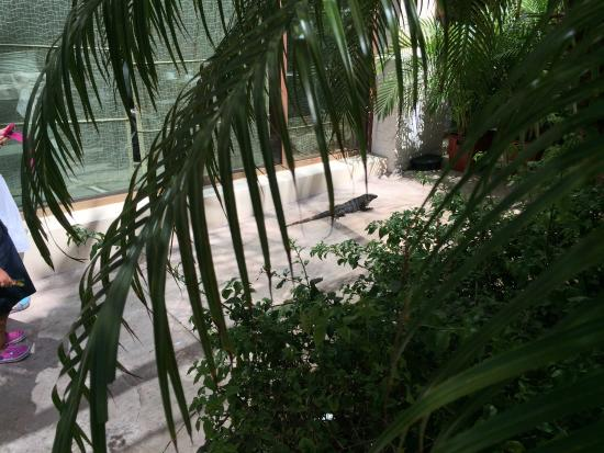 Dreams Riviera Cancun Resort & Spa: .... just outside the World Cafe