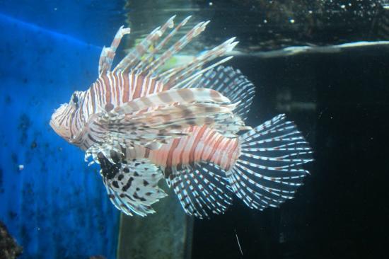 Parque Explora: On the aquarium