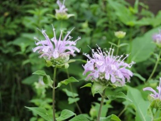 Springbrook, WI: wildflowers at your front door