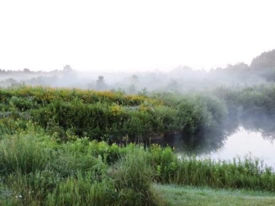 Springbrook, WI: morning mist over pond