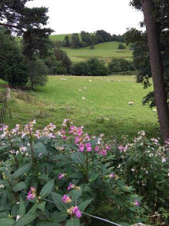 Cyffdy Farm Cottages