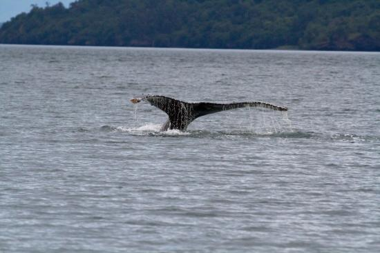 Kodiak National Wildlife Refuge, AK: Whale watching - up close!