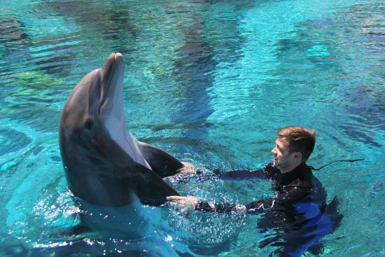 Dolphin Habitat - Trainer for a Day
