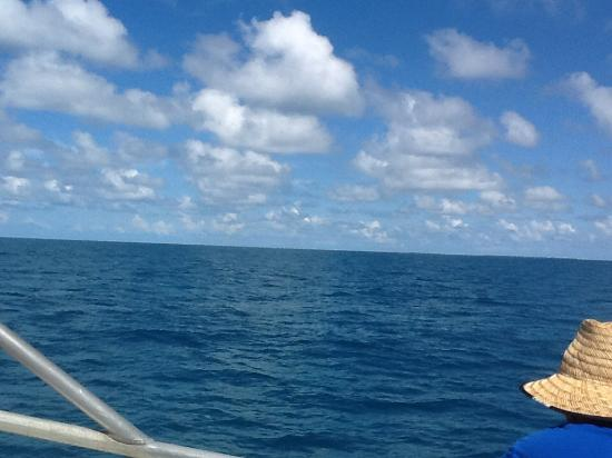 Endless horizon picture of gulfstream fishing key west for Gulf stream fishing