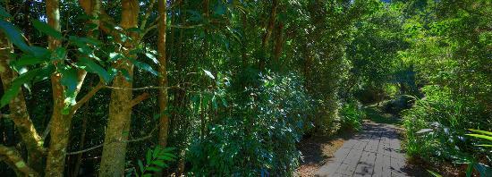 مونتاجيو أوف مونتفيل: Rainforrest