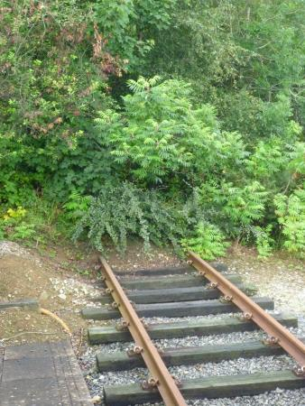 The Tamar Valley Line: The end of the current line