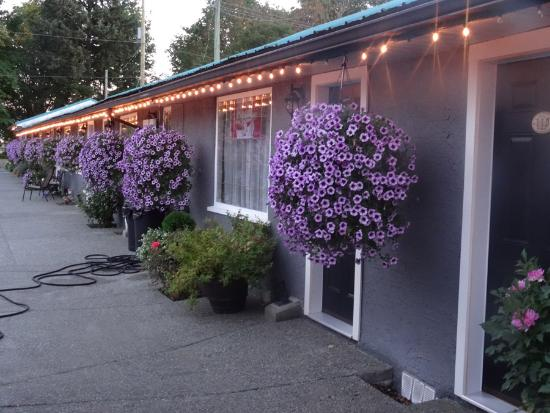 Riverside Motel: Gorgeous flowers out front