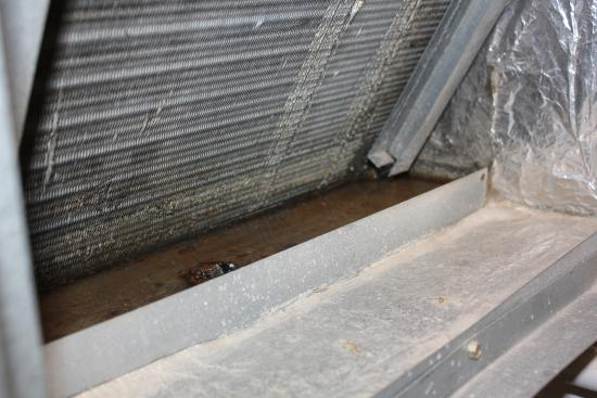 Residence Inn by Marriott Seattle Northeast-Bothell: Mold in dirty HVAC system