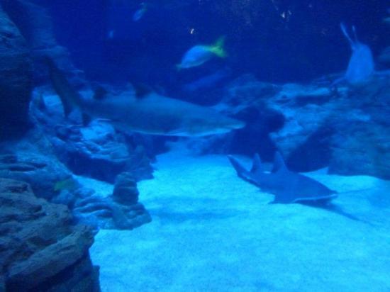 photo0 jpg picture of aquarium mare nostrum montpellier tripadvisor