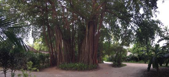 Kuramathi: Garden