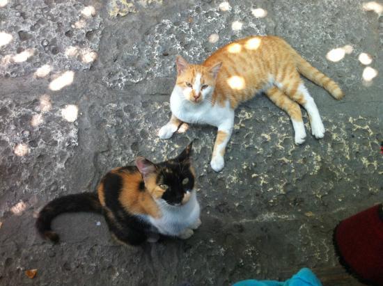 Кот по-болгарски