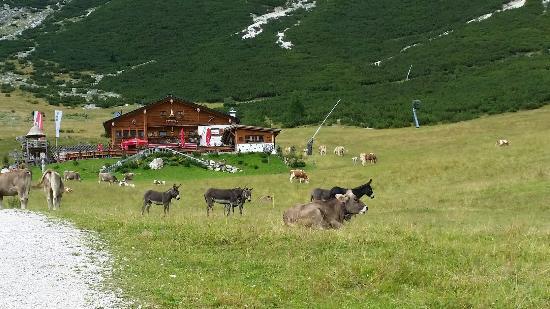Rifugio Edelweiss: La natura